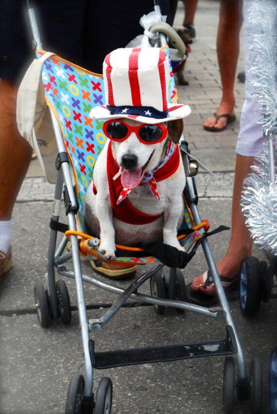 Dachshund Parade, Dec. 31,2013, Key West, Florida